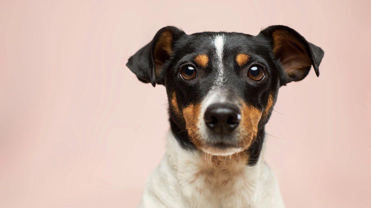 Pourquoi assurer la responsabilité civile de votre animal de compagnie?